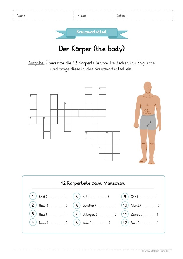 Körper / Body - MaterialGuru